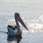 Lake Conjola Getaway
