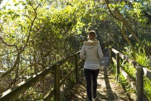 Peaceful walks through Narrawallee Creek Nature Reserve
