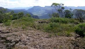 bush walk morton national park